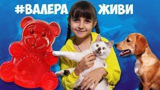 Поддержим медведя Валерку Лиза щенок Тафи и кошка Карамелька разбирают ёлку