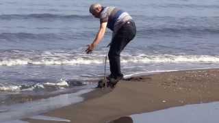 Kasım AVCI Ünye 39 nin Cüri Sahillerinde 16 10 2013 1