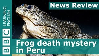 BBC News Review: Frog death mystery in Peru