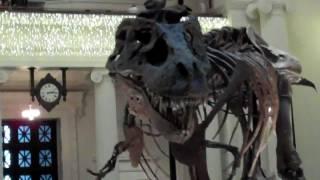 Sue the Tyrannosaurus rex (in HD)