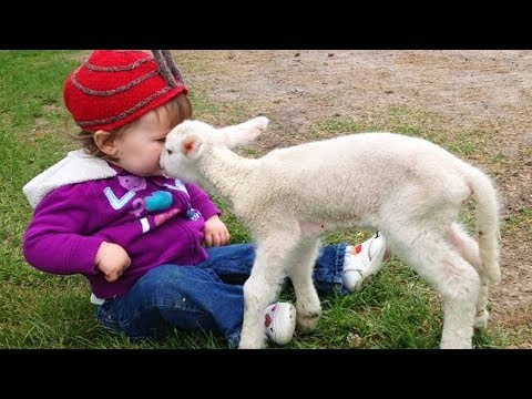 CUTE Friendship Between Babies and Sheep - Funny Baby and Animal Compilation