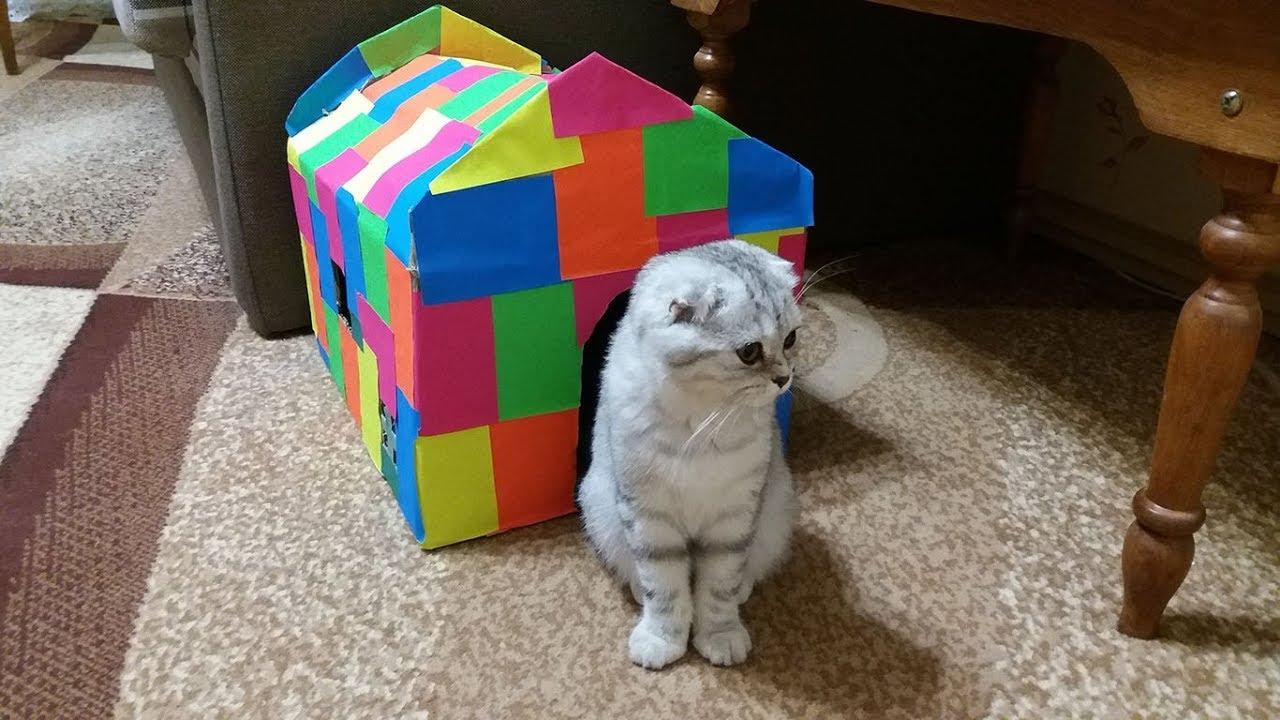Купили Котенка 😻 Шотландская Вислоухая Кошка Хлоя 😻 Игры с ...