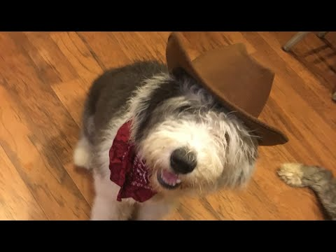 Bears, Growing Up On The Farm | Old English Sheepdogs