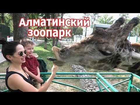 VLOG: В алматинском Зоопарке после ремонта / Кормим жирафа с рук