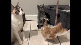 Littlest Kittens Still Afraid Of Me & Jack Trills When He Purrs - #24