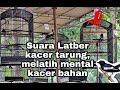 Suara Latber Kacer Tarung Melatih Mental Kacer Bahan  Mp3 - Mp4 Download