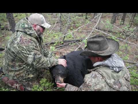 Alberta Black Bear Hunts