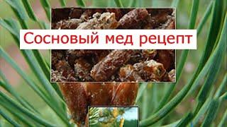 сосновый мед рецепт
