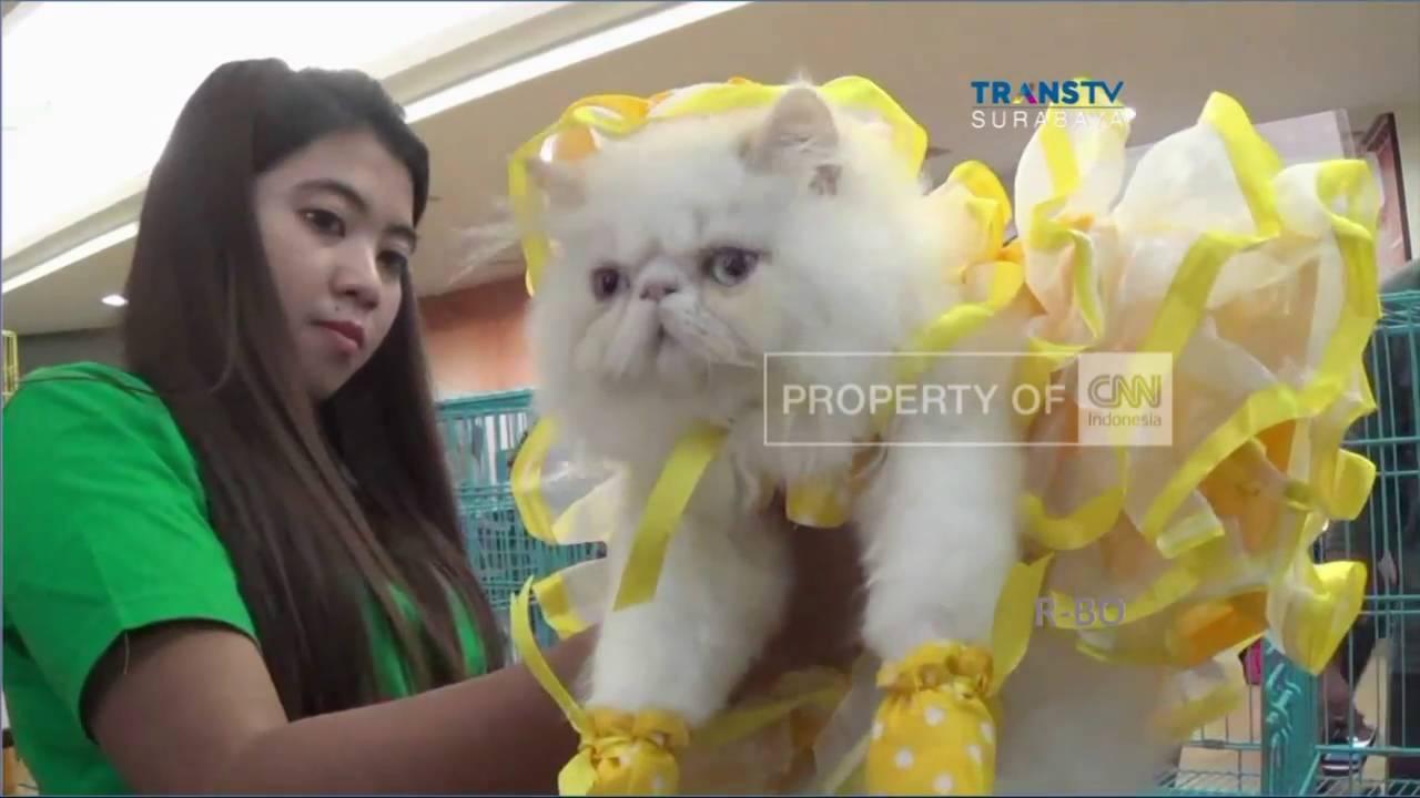 Kontes Kucing Unik Youtube