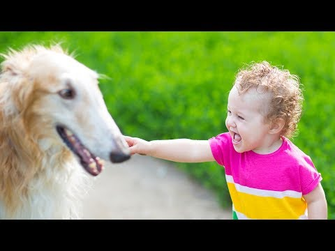 Big Dogs Playing with Babies Funny dog and Baby Compilation