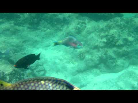 snorkelling-at-racha-yai-island
