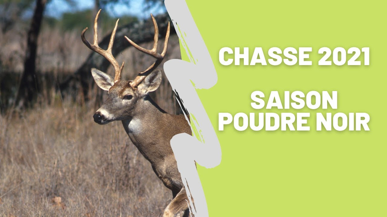 Download Chasse Chevreuil 2021 Saison poudre noir (Ep.8)