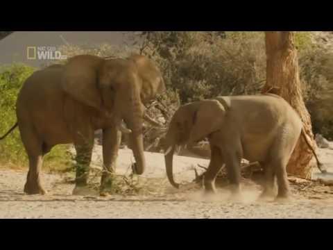 National Geographic Wild Namibia  Africa's Dry Savannah Wildlife Documentary