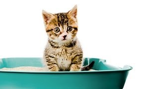 How to Litter Train a Kitten-Litter Training a Cat http://bit.ly/ZY...
