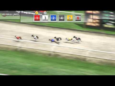 netbet virtual Dog Racing