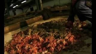 Hard Labour   - maggots