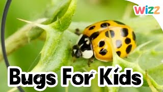 Ladybirds For Kids