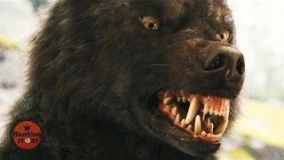 【열람주의】 동물세계의 살인귀 5