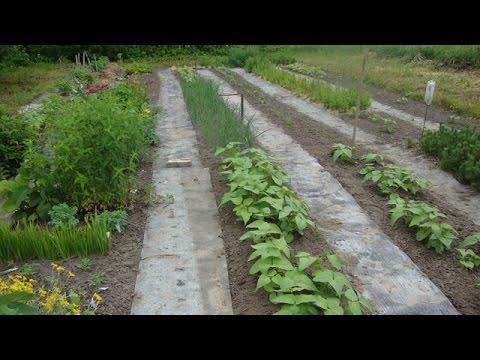видео: Как сделать дорожки в огороде - Ленивый огород