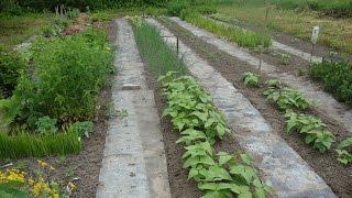 Как сделать дорожки в огороде - Ленивый огород