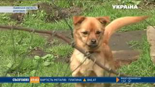 Собака напав на дитину в Дрогобичі на Львівщині