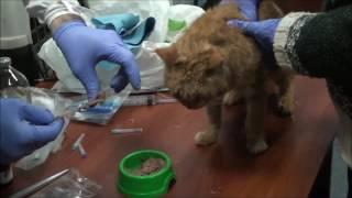 Лечение и кормление кота
