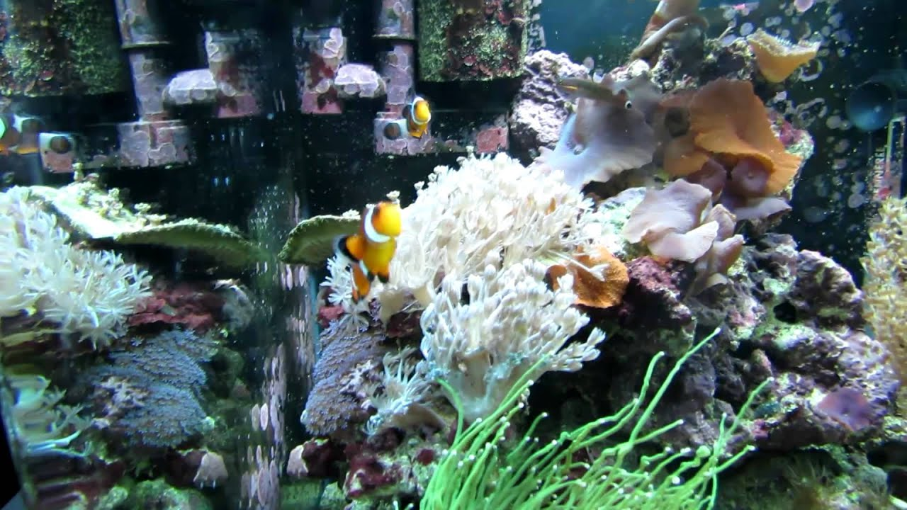 dennerle 60l marinus nano reef tank youtube. Black Bedroom Furniture Sets. Home Design Ideas