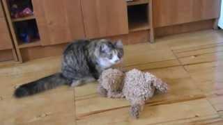 Почему кошка не может стать собакой? А вот и может!