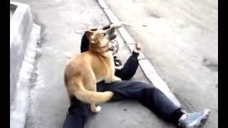 Борьба собаки с человеком