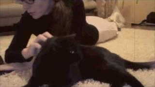 У кошки 4 ноги