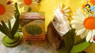 видео солянка холмовая лечебные свойства