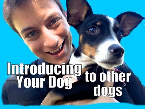 How to Socialize your Puppy!