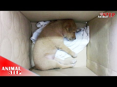 Sick Puppy Found Dumped in a Cardboard Box