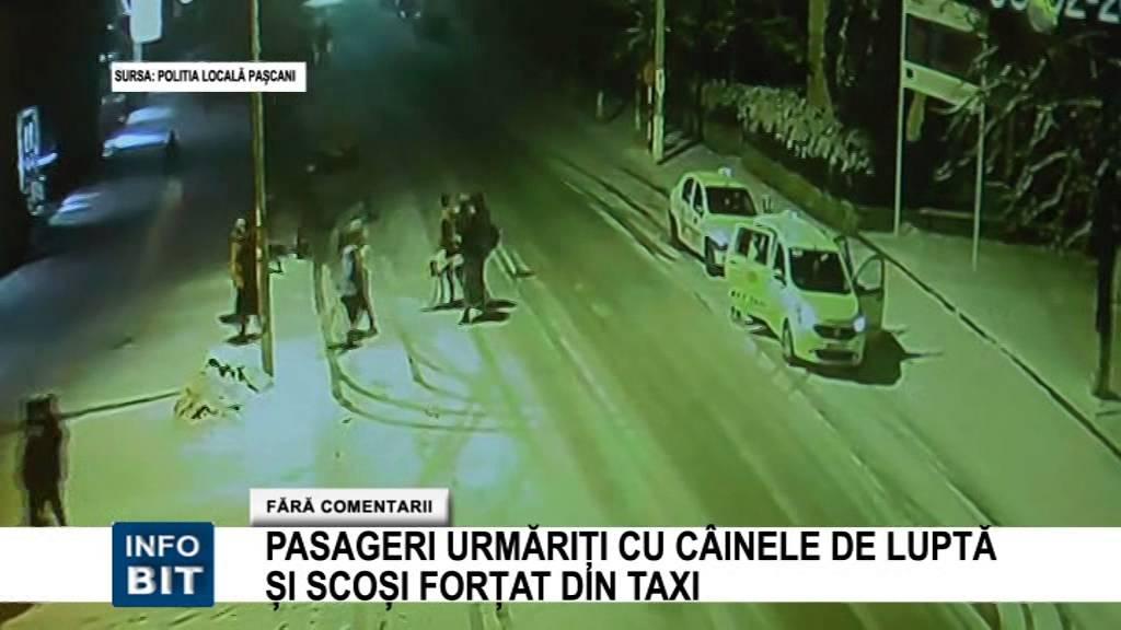 Bittv Pasageri urmariti cu cainele de lupta si scosi fortat din taxi