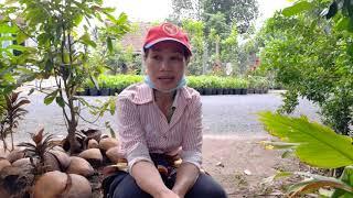 Giá tiềm nâng của trồng dừa sáp