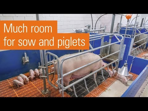 Variable-restraint pen with farrowing frame | ActiWel