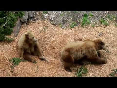Bern Bear Park / Bärengraben | Switzerland,  2013 | Fossa degli orsi |