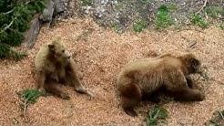 Bern Bear Park / Bärengraben   Switzerland,  2013   Fossa degli orsi  
