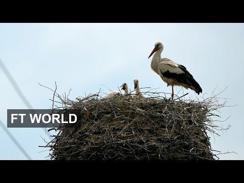 The parent trap I FT World