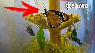 пЕРВАЯ ФЕРМА БАБОЧЕК с бабочками КАК УХАЖИВАТЬ И КОРМИТЬ