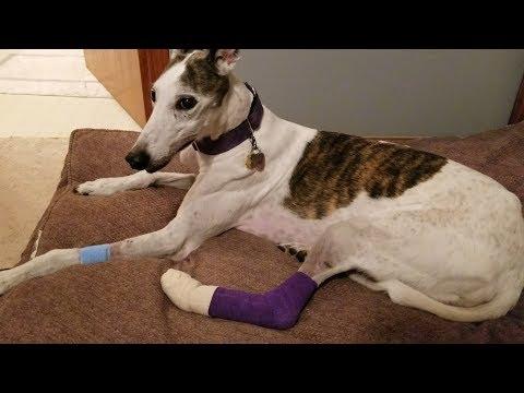 Healing Pet Injuries [3.04]