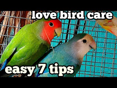 How to take care of love birds(in Hindi and English)
