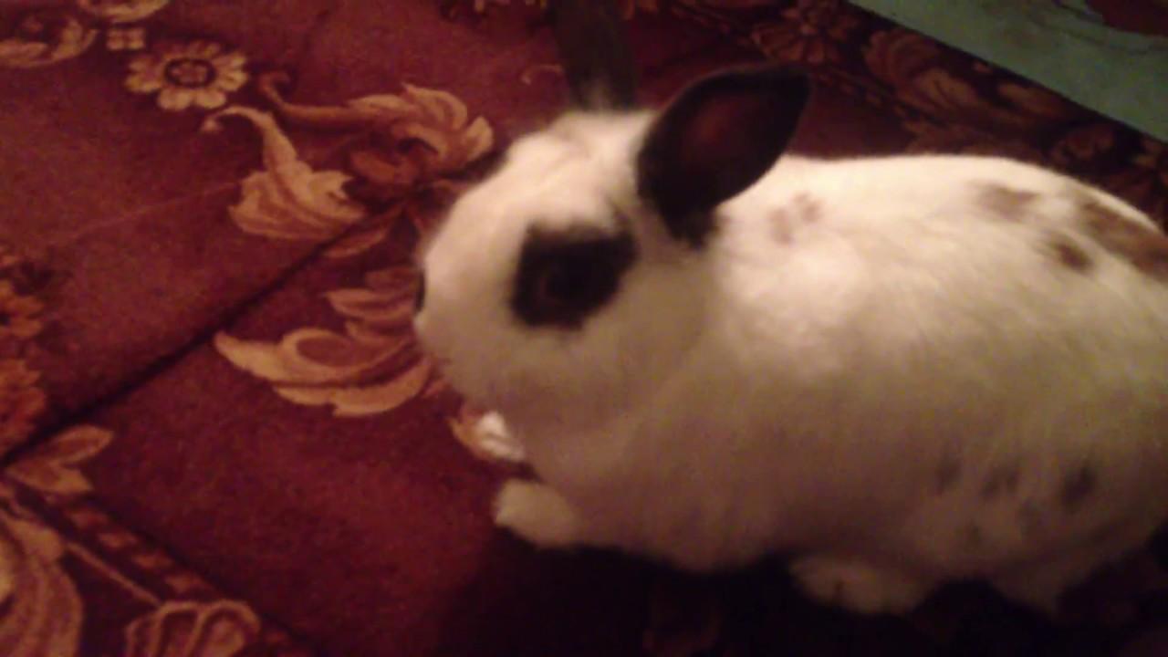 Видео как зайцы трахаются, сначала общение потом секс