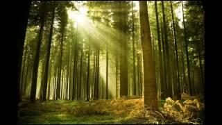 Релакс Звуки безмятежной природы птицы ручей Утро в лесу