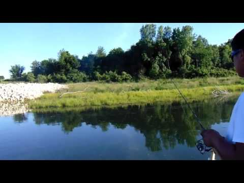 It's A Multi Species Kind Of Day  Pleasant Creek Palo 6/7/17