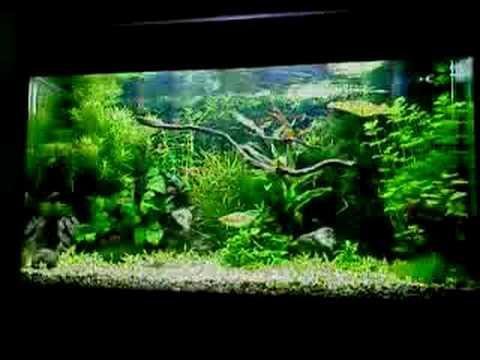 juwel rio 125 planted aquarium youtube. Black Bedroom Furniture Sets. Home Design Ideas