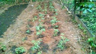 Farming for dummies- Promoting Food Security & Organic Farming in Ghana