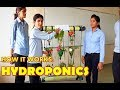 How to make HYDROPONICS   Science working model   Good Project   Desi Engineering   Simple Project  