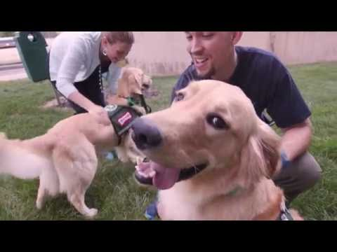 Denver's New Job: Animal Therapy at C.S. Mott Children's Hospital (Paws4Patients) on YouTube