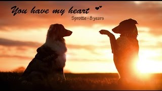 ♡ You have my Heart  [Sprotte  8 Years] ♡